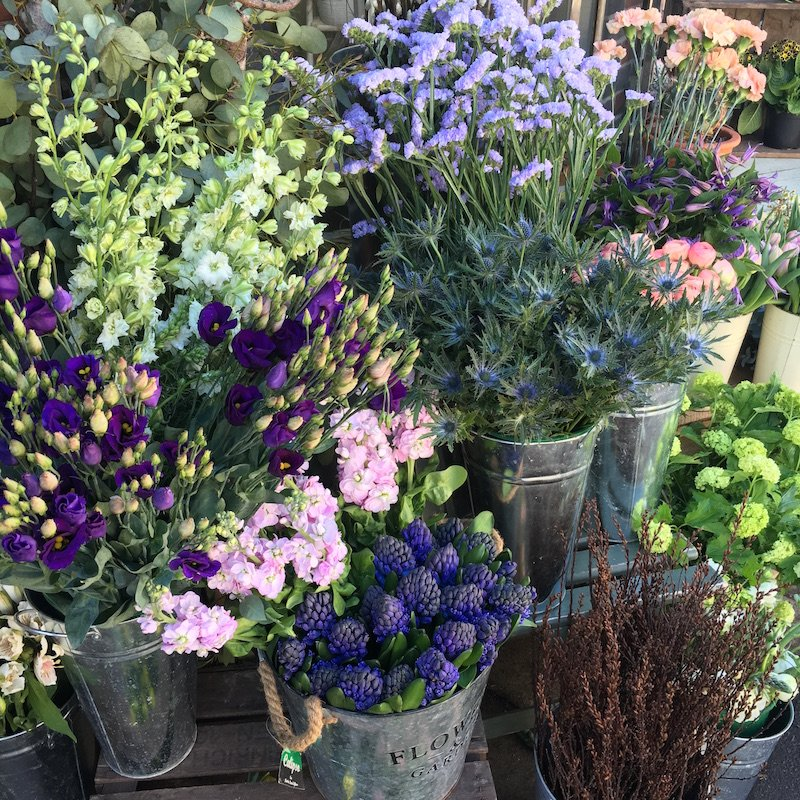 purple and white flowers florist reading